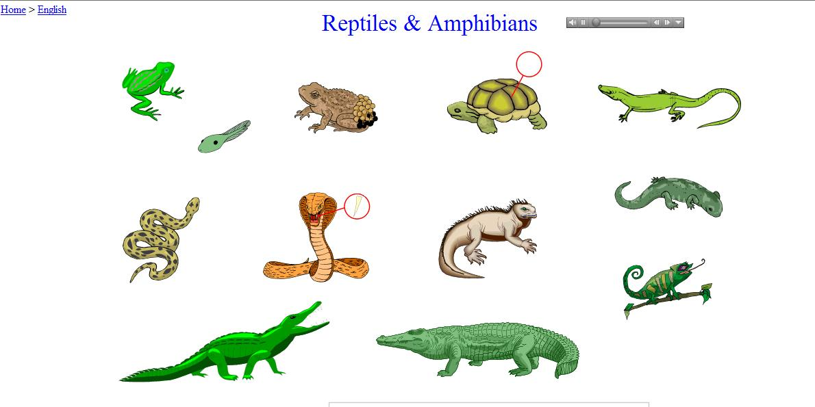 Reptiles And Amphibians English Guide Org